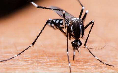 Dengue, Chikungunya y Zika. Gacetilla de Región Sanitaria III